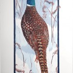 Pheasant by Sinead Wall