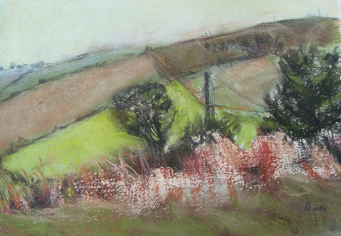 Trees and Fields by Charlotte Kelly