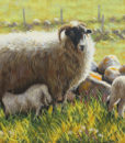 Ewe and Lambs by Keith Glasgow