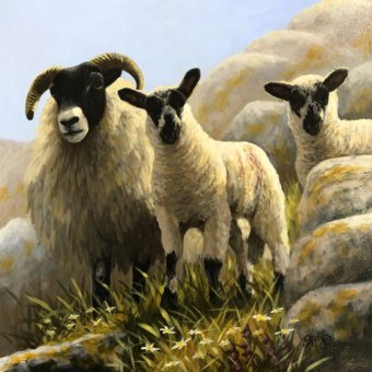 Ewe and Lambs looking down by Keith Glasgow