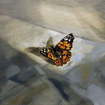 Painted Lady by Beatrice O'Connell