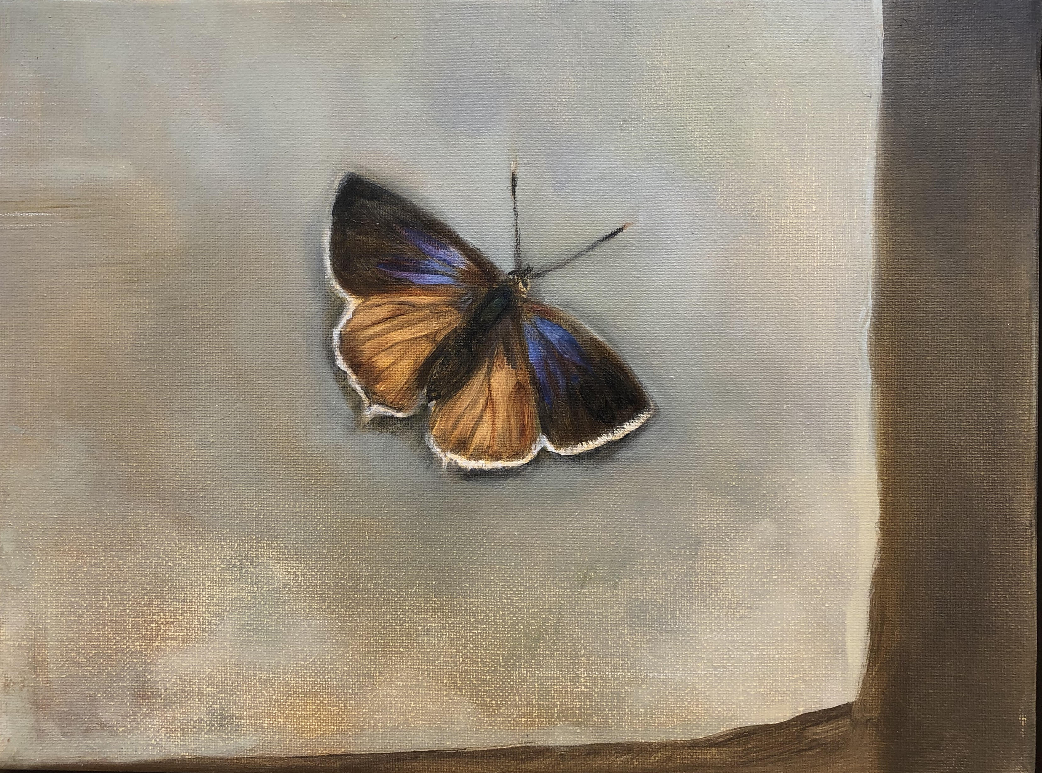Purple Hairstreak by Beatrice O'Connell